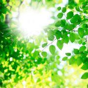 睡眠と太陽光の関係について