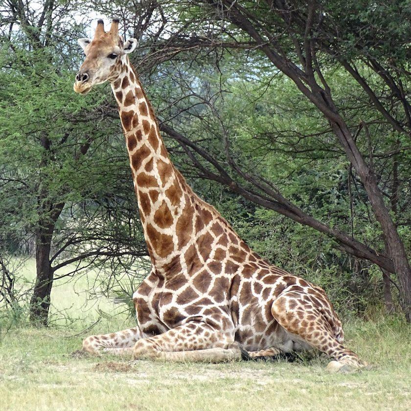 睡眠について知ろう】動物の睡眠について – リフランス オンラインストア